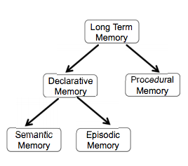episodic and semantic memory essay