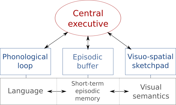 Structure Of Short Term Memory Bethopedia